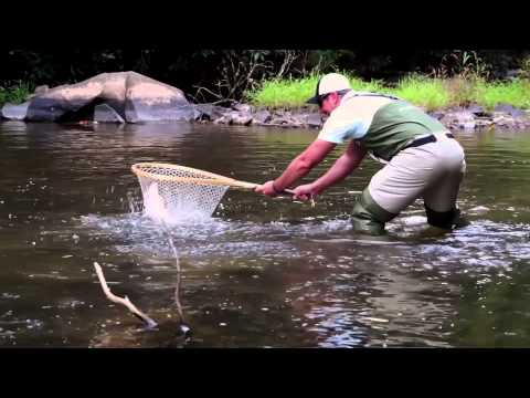 Selecting A Net For Fly Fishing Trout Streams