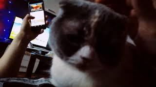 Кошка Рождество смотреть онлайн бесплатно без регистрации и без смс