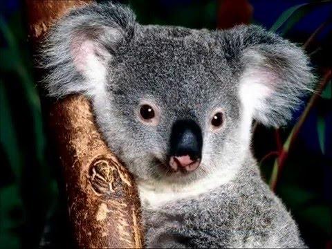 The animals from Australia-De dieren van Australië