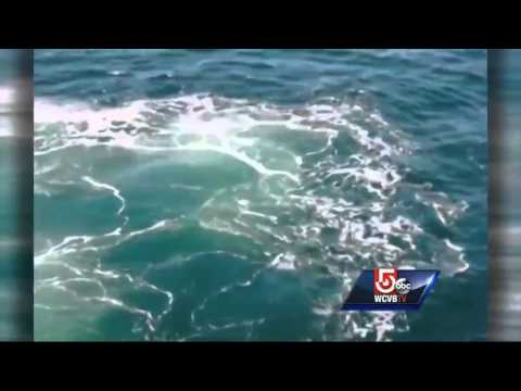 Beluga whale spotted in Gloucester Harbor
