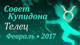 Телец, совет Купидона на февраль 2017. Любовный гороскоп.