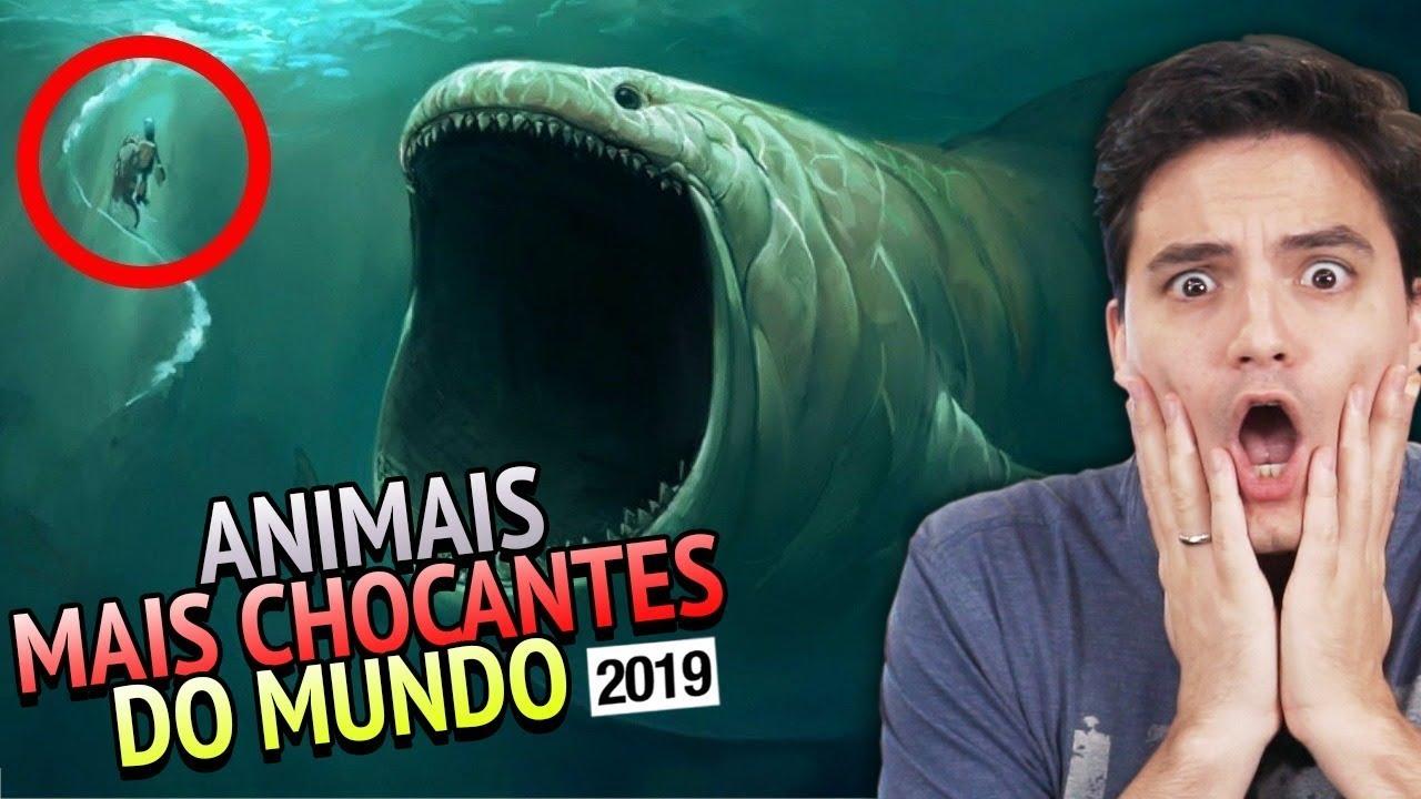 ANIMAIS MAIS CHOCANTES DO MUNDO