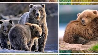 В мире животных Камчатка