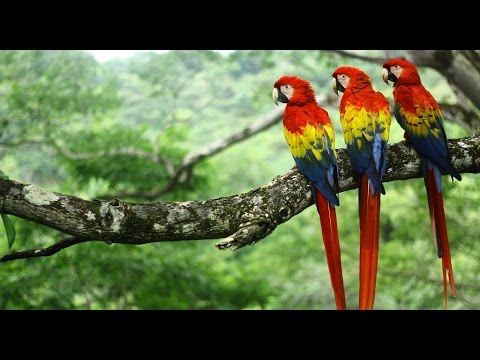 A Guide to Owning a Scarlet Macaw | PetHelpful