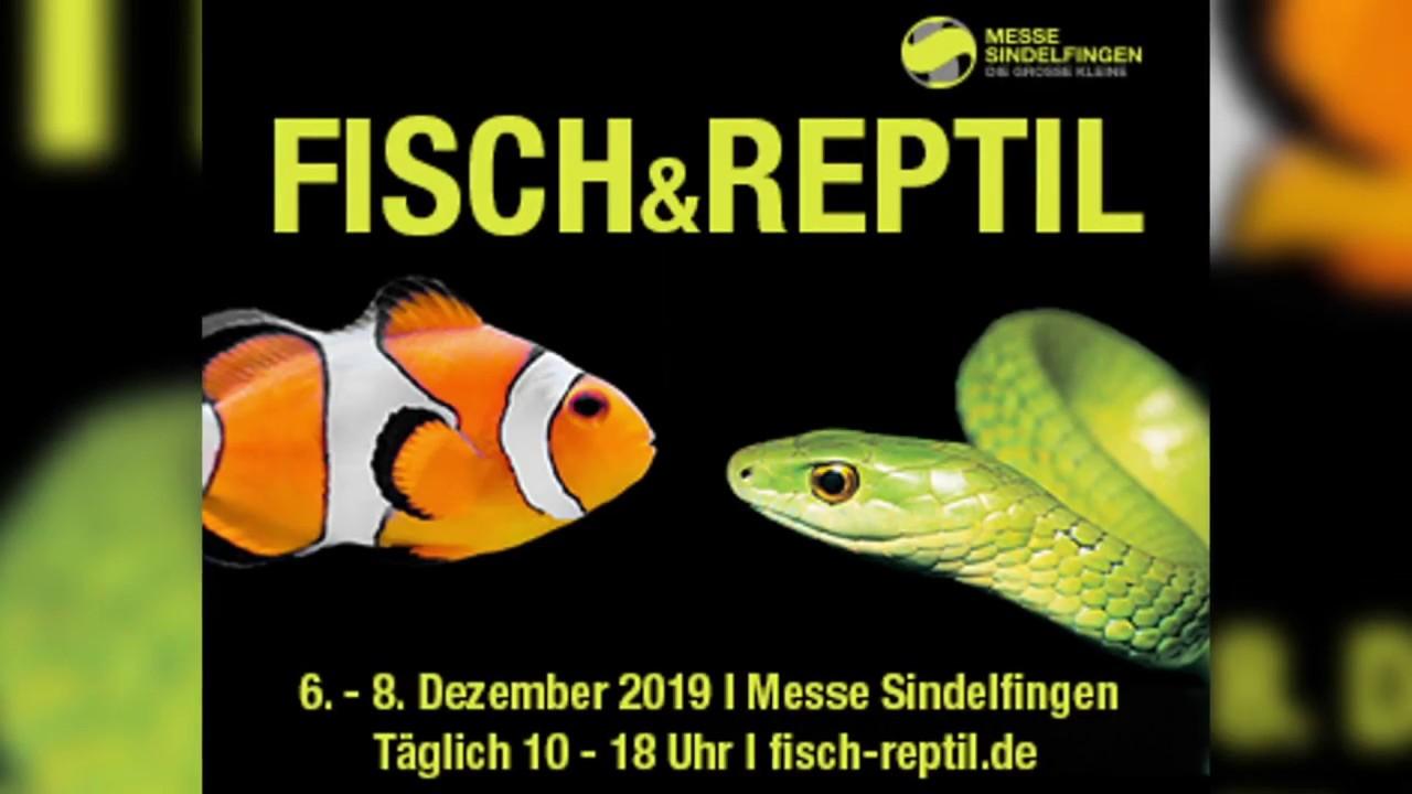 fisch und reptil