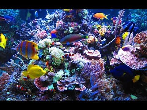 Doku in HD Steffens entdeckt - Palau - Korallenparadiese der Südsee