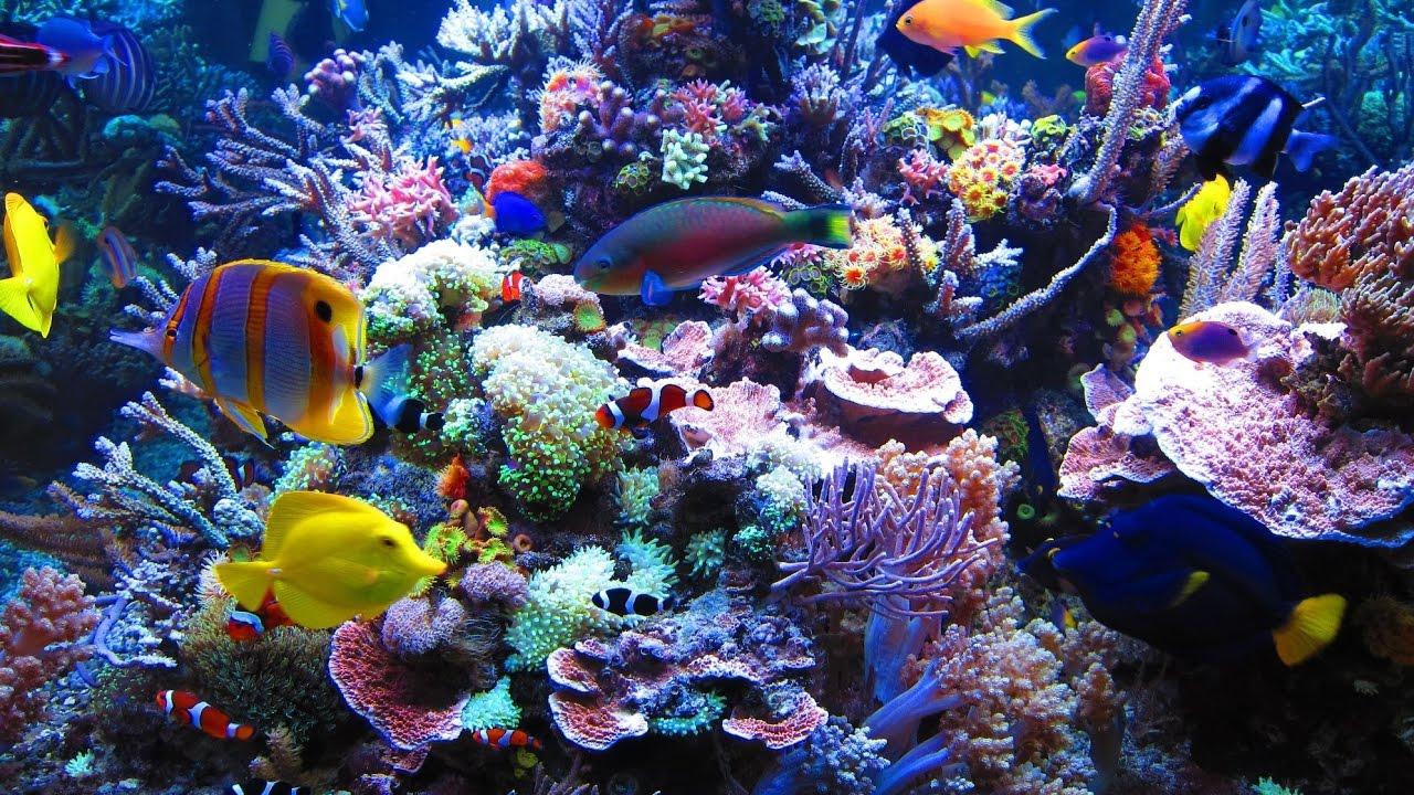 Doku In Hd Steffens Entdeckt Palau Korallenparadiese