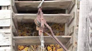 Removing Corn From Corn Crib