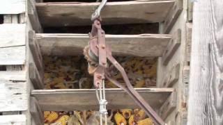 Removing Corn From Corn Crib