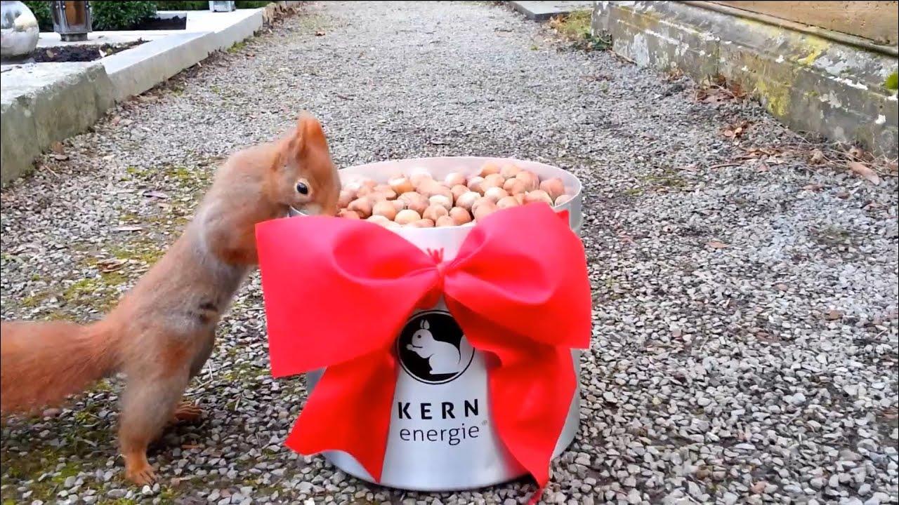 Eichhörnchen bekommt sein Weihnachtsgeschenk: Die große KERNenergie ...