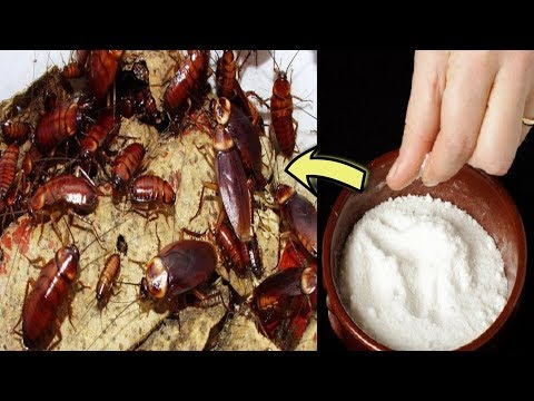 How To Get Rid Of Cockroaches Fast In Kitchen Cabinets – With Natural Home Remedies