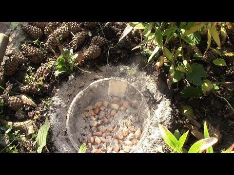 Вопрос: Как сажать луковичные в прикопанные контейнеры, корзины Какие нюансы?
