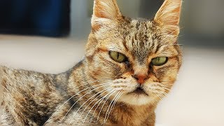 ZAYN Taylor Swift I Don't Wanna Live Forever Cats Cover