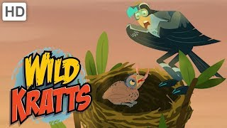 Wild Kratts 🦁👔 Animal Dads | Father