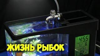 Жизнь рыбок в Китайском USB Аквариуме ВСЕ КРУТО СПАСИБО ALIEXPRESS