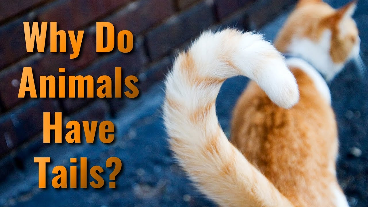 Why animals need a tail 83