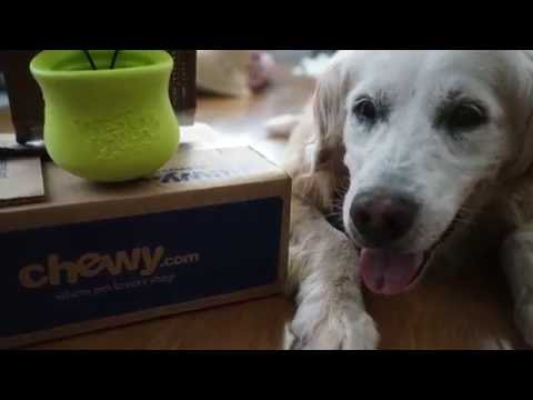 West Paw Toppl from chewy com #ChewyInfluencer