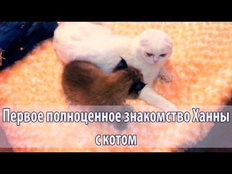 знакомства kotenka 24 москва
