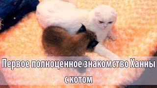Первое полноценное знакомство рыси с котом