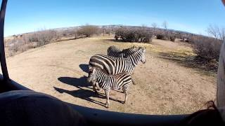 Safari Tour at Out of Africa Wildlife Park, Camp Verde, AZ