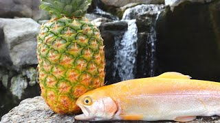 Catch n' Cook Trout IN a Pineapple!