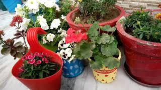 जितने भी पौधे रखें अब बालकनी हमेशा रहेगी साफ और सुंदर,Balcony cleaning ideas,anvesha,screativity
