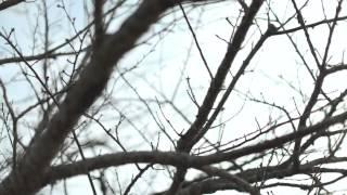 2013年2/20発売 「櫻/遠くまで」に収録されている、 「櫻」のPV(オリ...