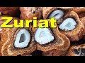 Buah ZURIAT DOUM Fruit For Fertility [HD]