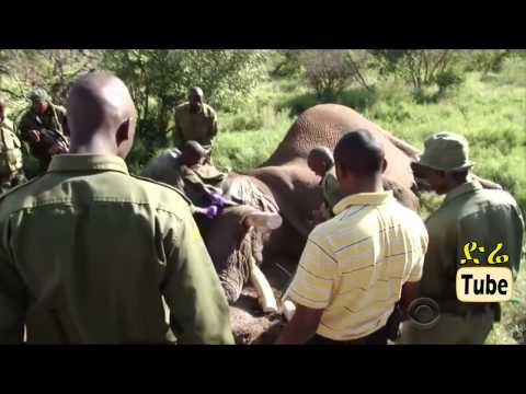 DireTube Video - The Miserable Life of Wild Animals in Ethiopia