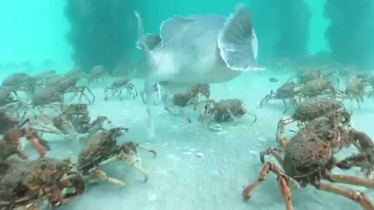 What does a stingray eat?