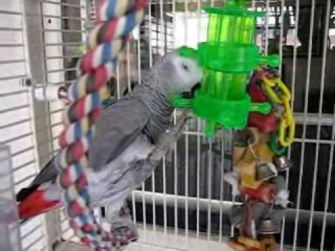 How to solve feather plucking and screaming in parrots