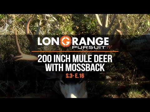 Long Range Pursuit | S3 E16  200 Inch Mule Deer with Mossback