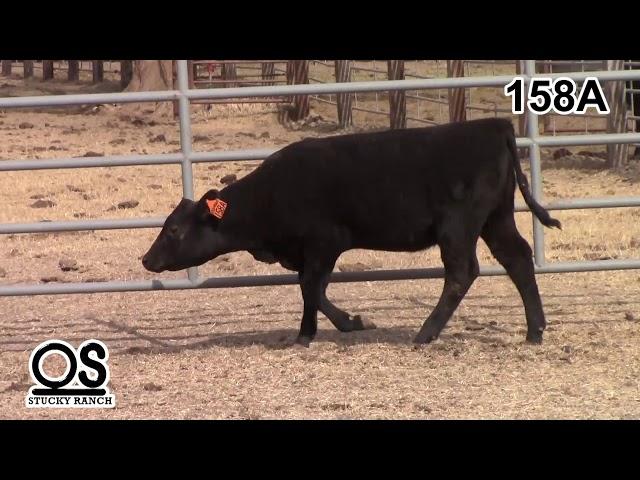 Stucky Ranch Lot 158a