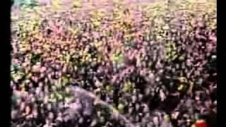 Biohazard - Love Denied ( Live @ Dynamo 1995)