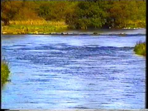 The Castleconnell Salmon Fishery