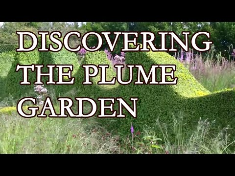 Discovering The Plume garden