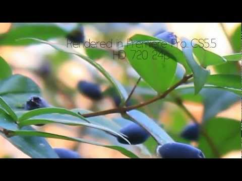 Canon 550D (T2i) + 18-55 EF-S Canon lens, clean test, by Dado Studio