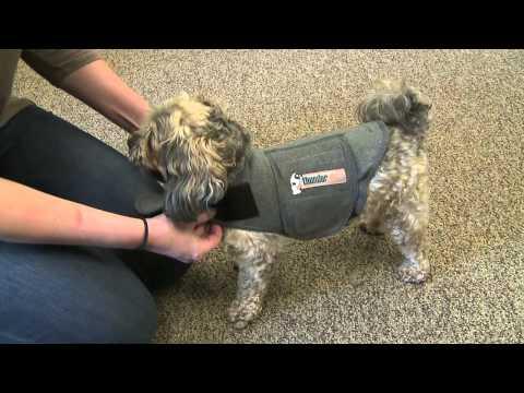 Thundershirt For Dog Afraid Of Lightning