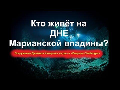 Кто живёт на ДНЕ  Марианской впадины? Погружение Джеймса Кэмерона на дно в «Deepsea Challenger»