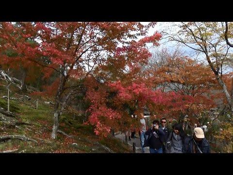 Autumn leaves at Tenryuji Temple, Arashiyama, Kyoto