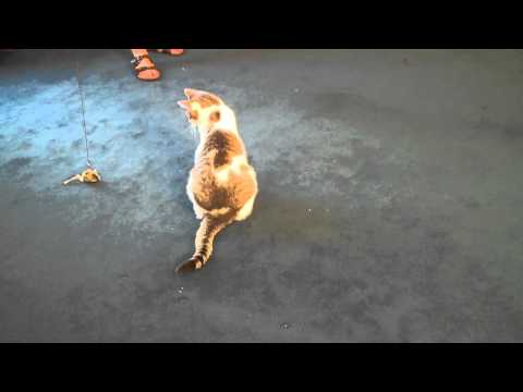 How to Play With Your Cat Using Interactive Cat Toys