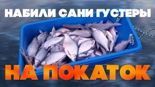 Покаток Зимняя рыбалка Дон Ловля на покаток