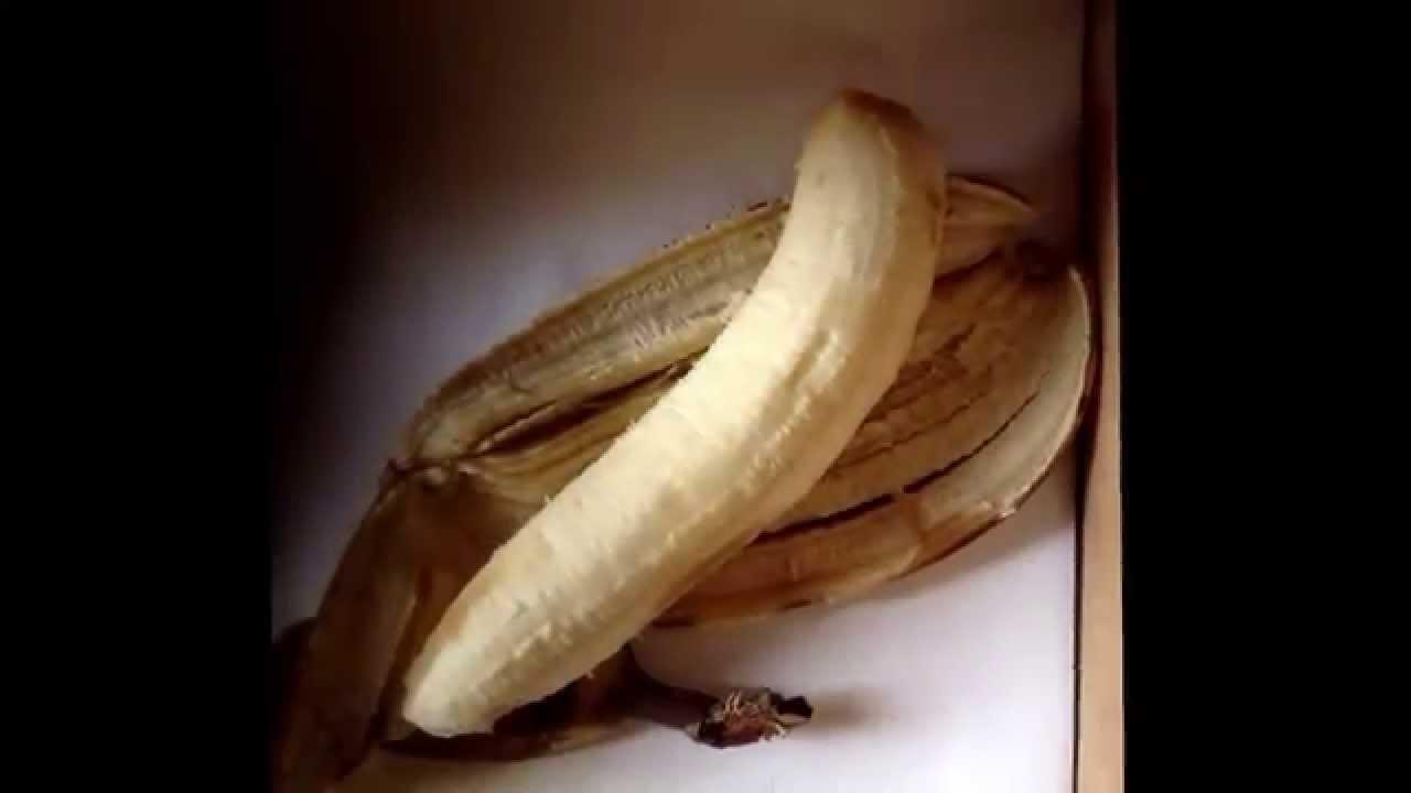 En banan i timelapse forsøg. Filmet i seks timer et billede pr. minut