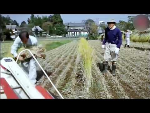 Мини комбайны или трактор. Новое сельское хозяйство. Часть 3. Mini harvesters.