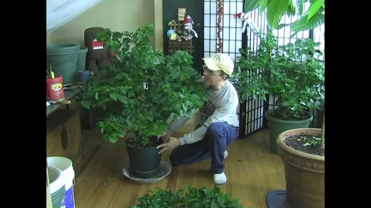 final tip for super strong huge pepper plants youtube