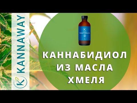 KannaWay. Каннабидиол из масла хмеля