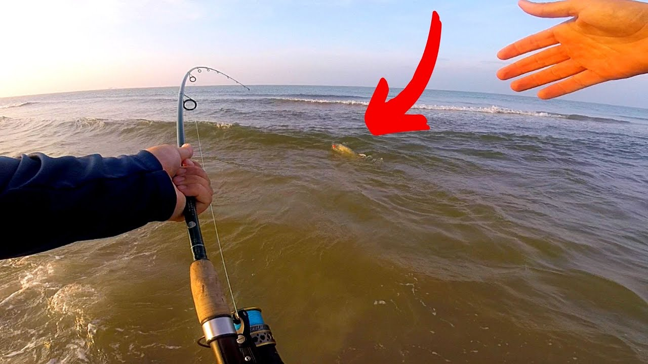 Another BEAST on The Topwater Popper Surf Fishing!