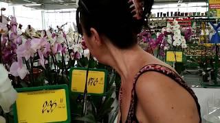 Орхидеи и цены в Эпицентре.Orchids and prices in Epicenter.