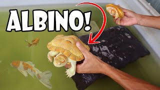 TAKING CARE OF PAUL CUFFARO'S RARE ALBINO TURTLES!!