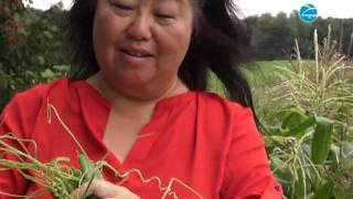 Hmong Report: Hmong Life - Farming & Soup Nov 20 2016